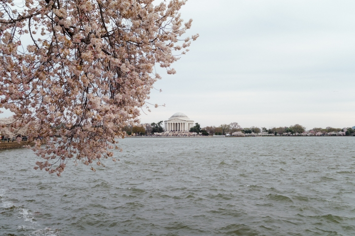Date Night in DC – Cherry Blossoms